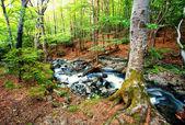 Río del bosque — Foto de Stock