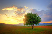 Hdr landscape with single tree — Stock Photo