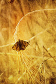 Old butterfly picture — Stockfoto