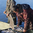 Fishermen with catch of fish cregonus — Stock Photo #11835493