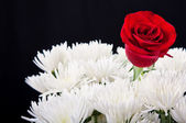 Red rose contrast in white bouget — Stock Photo