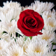 Single red rose in white bouget — Stock Photo #11169394