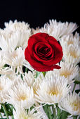 Single red rose in white bouget — Photo