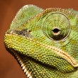 Macro of green cameleon — Stock Photo