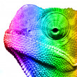 Macro of multi colored cameleon — Stock Photo