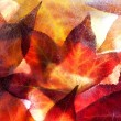 Autumn leaves frozen solid — Stock Photo #11992533