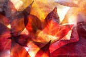 Autumn leaves frozen solid — Stock Photo