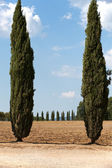 The landscape of the Tuscany. Italy — Fotografia Stock