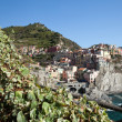 Manarola - one of the cities of Cinque Terre in italy — Foto de Stock