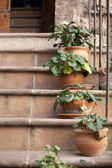 Flowers in pots on the stone steps — Stock Photo