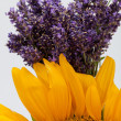 Sunflowers and Lavender — Stockfoto