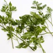Green leaves of parsley — Stock Photo #11818744
