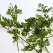 Green leaves of parsley — Stock Photo #11892559