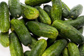 A fresh green cucumber — Stock Photo