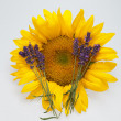 Sunflowers and Lavender — Photo