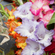 Colorful bouquet of gladioli — Stock Photo