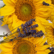 Sunflowers and Lavender — Stock Photo