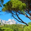 Green summer pine and high rocky mountains - Stock Photo