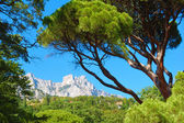 Green summer pine and high rocky mountains — Stock Photo