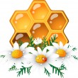 Honeycomb and daisy — Stock Vector