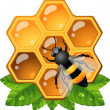 Bee on honeycomb — Stockvectorbeeld