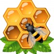 Bee on honeycomb - Stock Vector