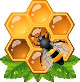 Bee on honeycomb — Stock Vector