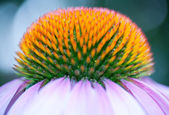 Primer plano de bella flor — Stockfoto