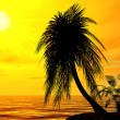 Single palm on uninhabited island on brightly sunset — Foto Stock #11642363