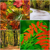 Autumn landscape with bright red and yellow leaves — Stock Photo