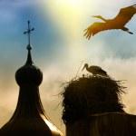 Storks — Stock Photo