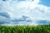 Pole a modré nebe — Stock fotografie