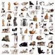 Cats in studio — Stock Photo