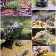 Stock Photo: Reptiles and amphibians