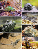 Reptiles and amphibians — Stock Photo