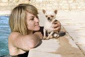 Chihuahua and girl in the swimming pool — Stock Photo