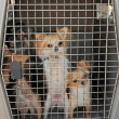 Dogs in kennel — Stock Photo