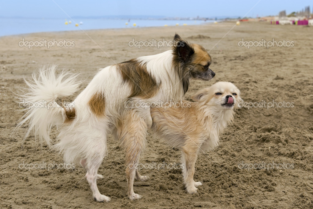 Dog Fight At Dog Park Who Pays