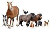Farm animals — Stockfoto