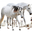 Group of white pet — Stock Photo