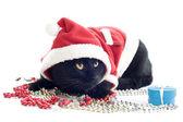Cat Santa Claus — Stock Photo