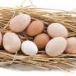 Fresh eggs — Stock Photo