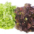 Stock Photo: Red and green salads
