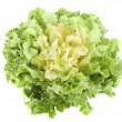 Escarole endive — Stock Photo #14724223