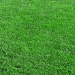 Stock Photo: Beautiful green grass