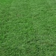 Beautiful green grass — Stock Photo