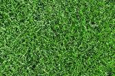 Linda grama verde — Foto Stock