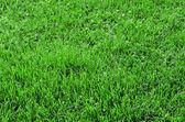 Vackert grönt gräs — Stockfoto