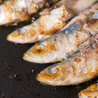 Stock Photo: Sardines on griddle