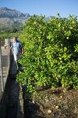 Tradtional irrigation — Stock Photo